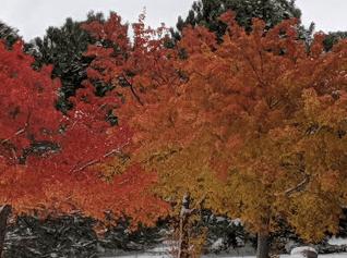 Screen Shot 2019-10-12 at 4.01.57 PM