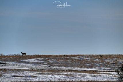 March 20, 2020 - Wildlife around Grand Forks, ND