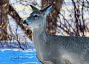 March 20, 2020 - Wildlife around Grand Forks, ND