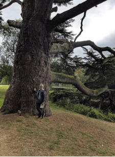 Blenheim Palace Lillian in front of enormous oak tree.