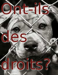 droits-animaux