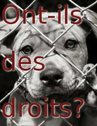 droits-animaux