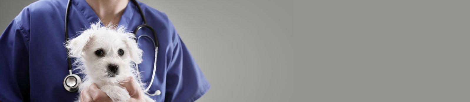 Medicina Veterinária - UniBrasil - Banner