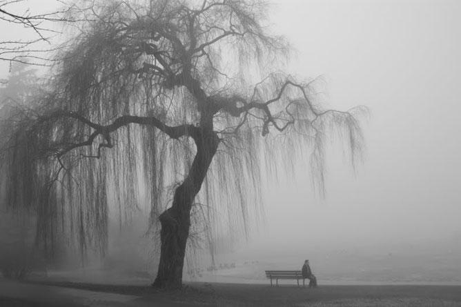 Magányos fa a tó partján egy padon ülő emberrel.