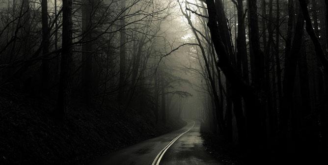 Ködös erdei út.