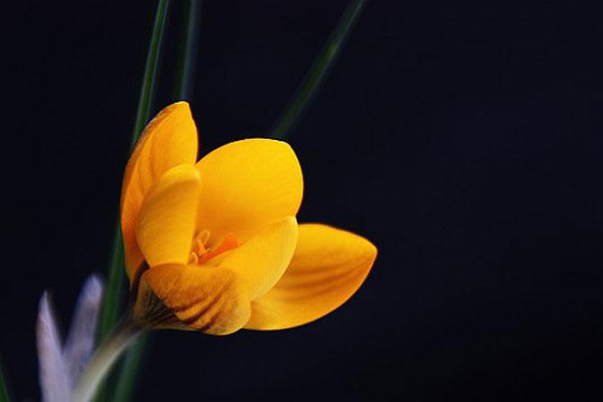 Sárga virág.