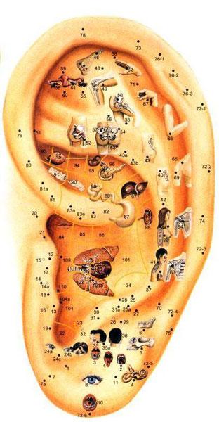Az emberi fül akupunktúrás pontjai.