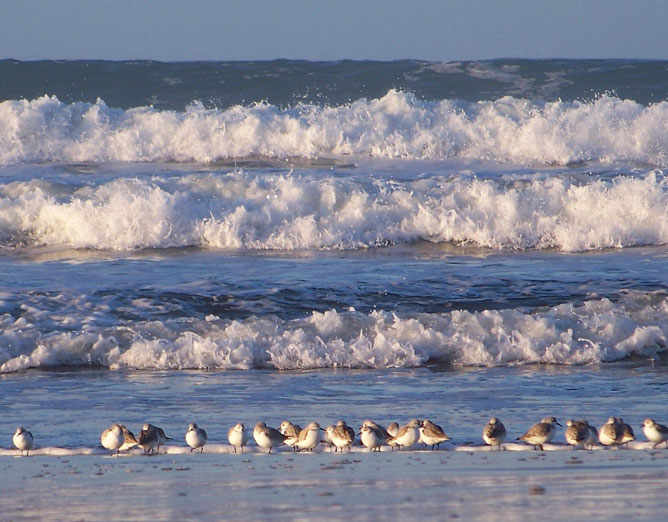 Hullámzó tenger madarakkal.