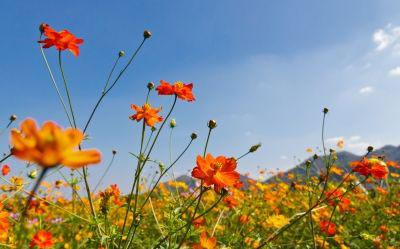 Gyógyító virágok.