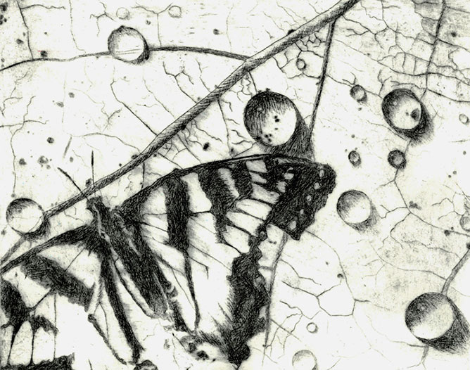 Pillangó art.