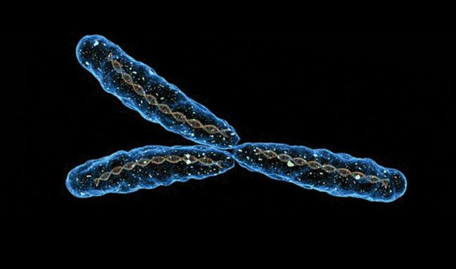 Y kromoszóma.