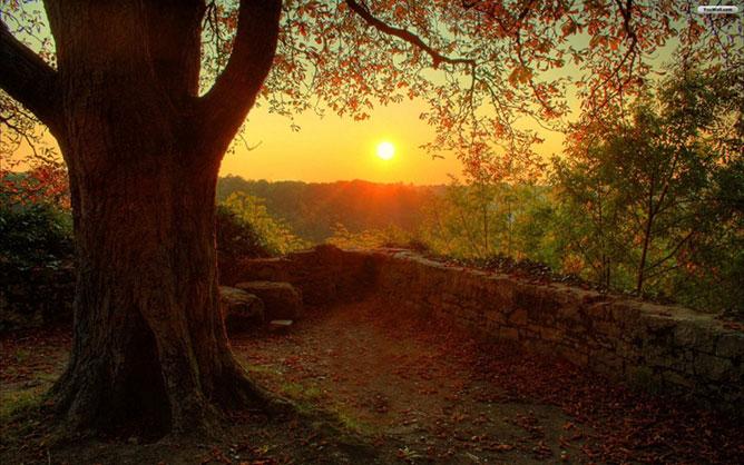 Sunset-Nature.