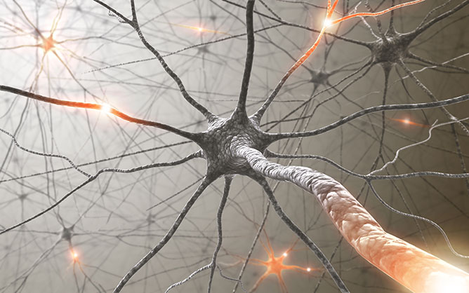 agyi szinapszis.