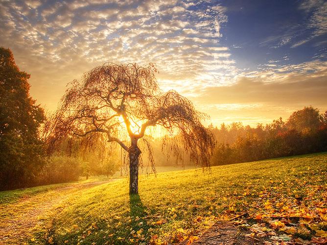 nice forest sunrise.