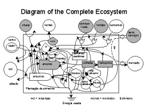 Diagram of the Complete Ecosystem