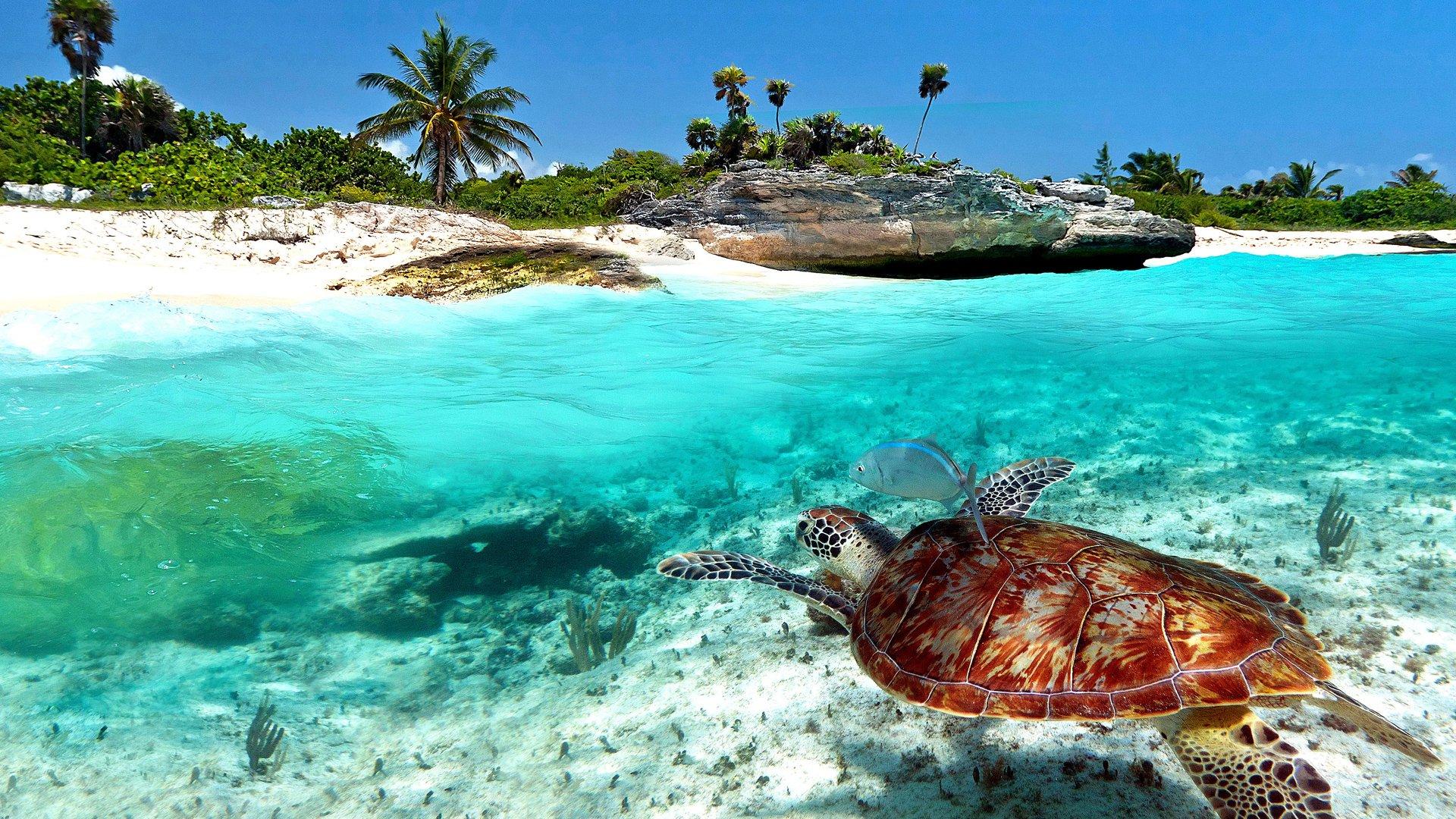 playa-del-carmen-turismo