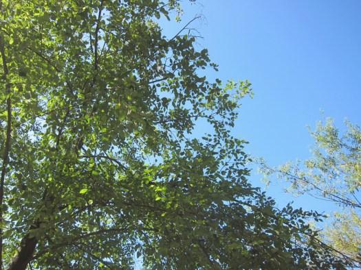 00trees&sky1