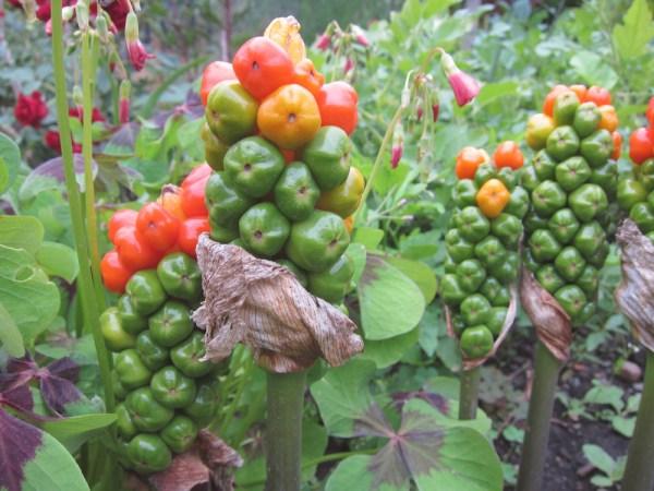 05weird plant