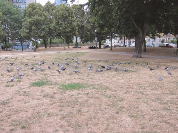 08birds