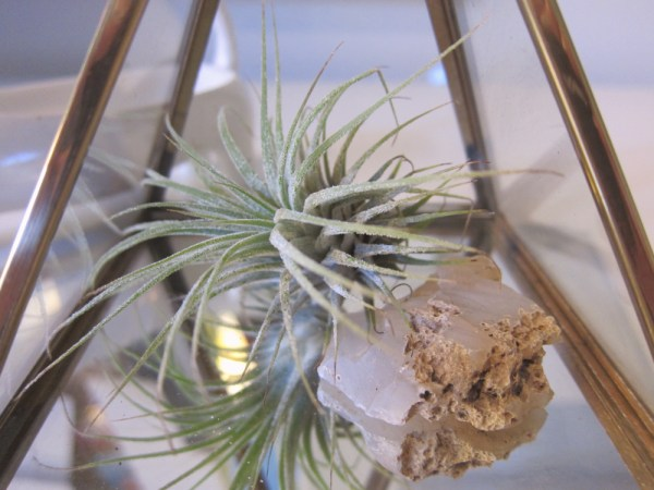 air plant friend 2