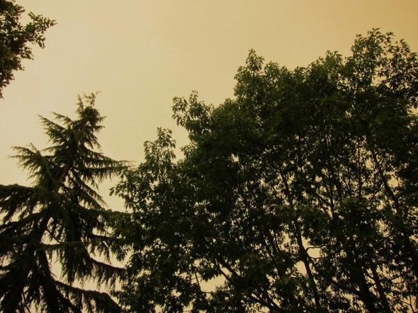 smokeandtrees1