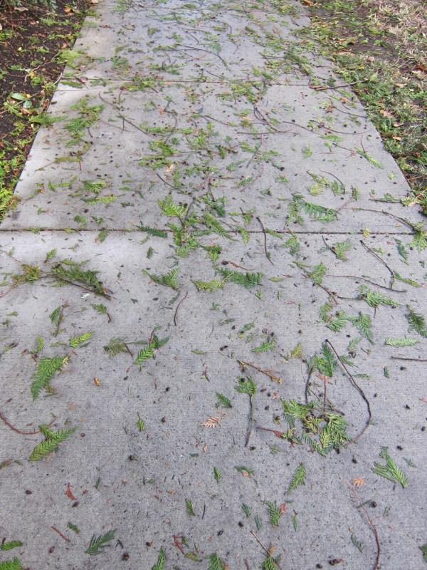 01 cedar sidewalk