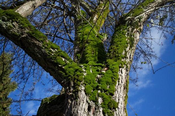 04 moss tree