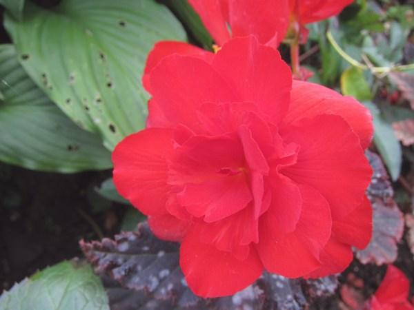 28QEPredflower