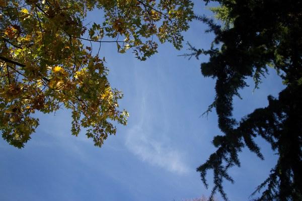 01 trees & sky