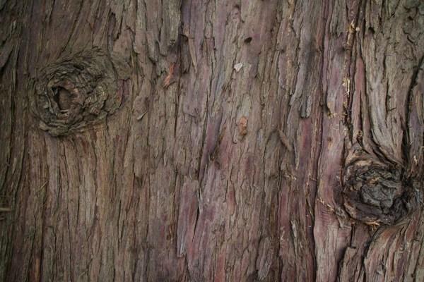 03 cedar bark
