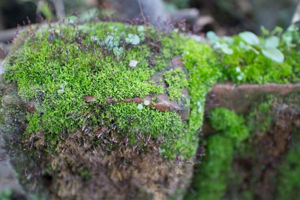 03 mossy brick