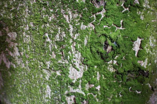 04 moss on tree trunk