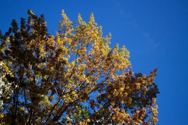 07 autumn leaves