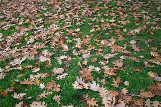 07 oak leaves