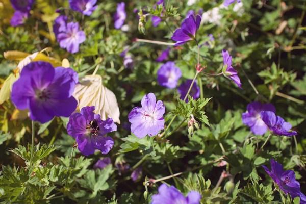 03 bee garden