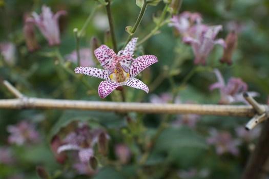 03-spot-flower
