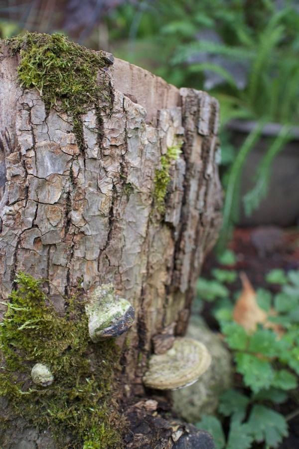 05-stump