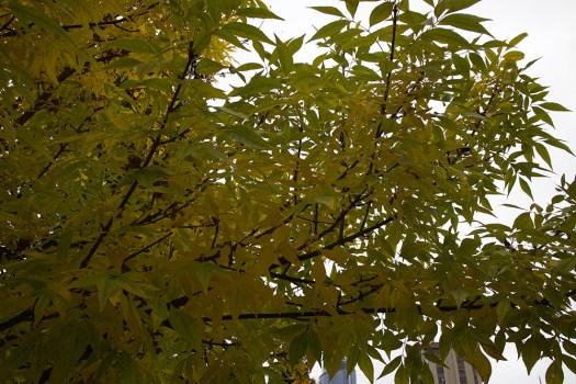 08-leaves