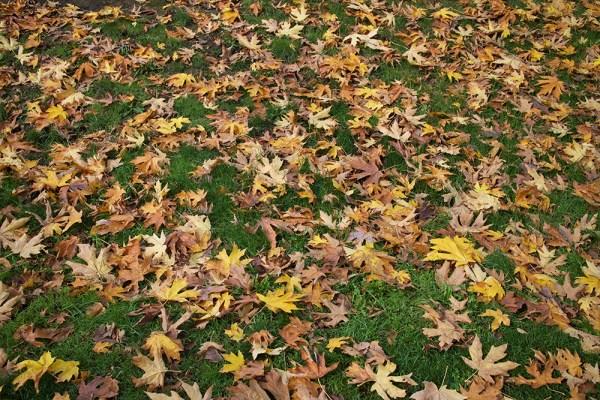01-leaves