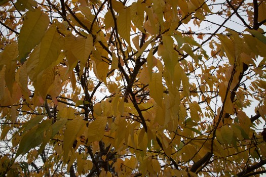 03-yellow-leaves