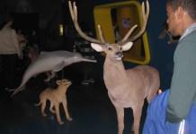 nuit des musées rennes