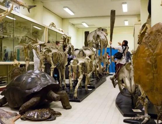 Visite de la galerie de zoologie