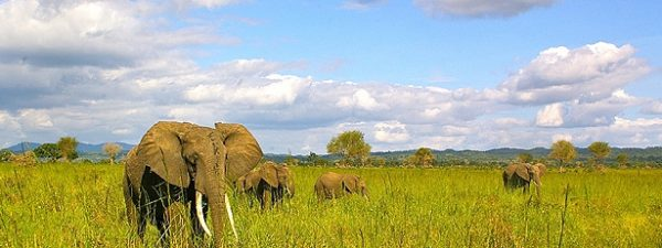 Best Tourist Attractions In Tanzania