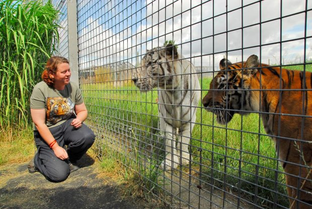 Zookeeper Killed By Tiger At Hamerton Zoo Was Big Cat Campaigner SWNS KING ZOO 05