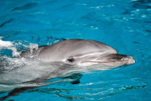 A Whale Learned Dolphin Language To Communicate With Them Capture 44 1