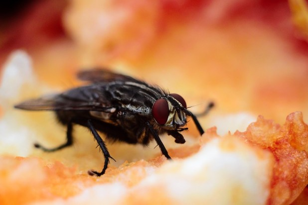 You Should Never Eat Food A Fly Has Landed On, Reveals New Study bug 1851155 960 720