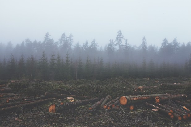 15,000 Scientists Give Catastrophic Warning About Fate Of Earth deforestation 351474 1920