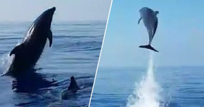 Mother Dolphin 'Jumps For Joy' As Fishermen Release Her Baby From Net