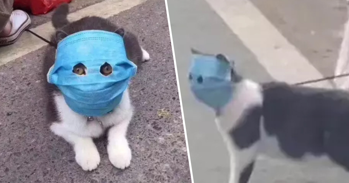 Cat Given Human Face Mask With Eye Holes To Protect From ...