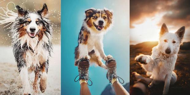 Bu Köpekler Tatlılık Konusunda Adeta Listenin Başındalar